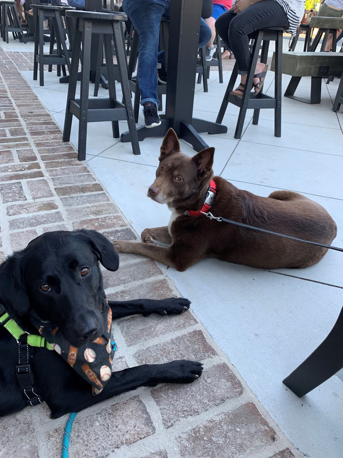 albus and little bear at glover park brewery
