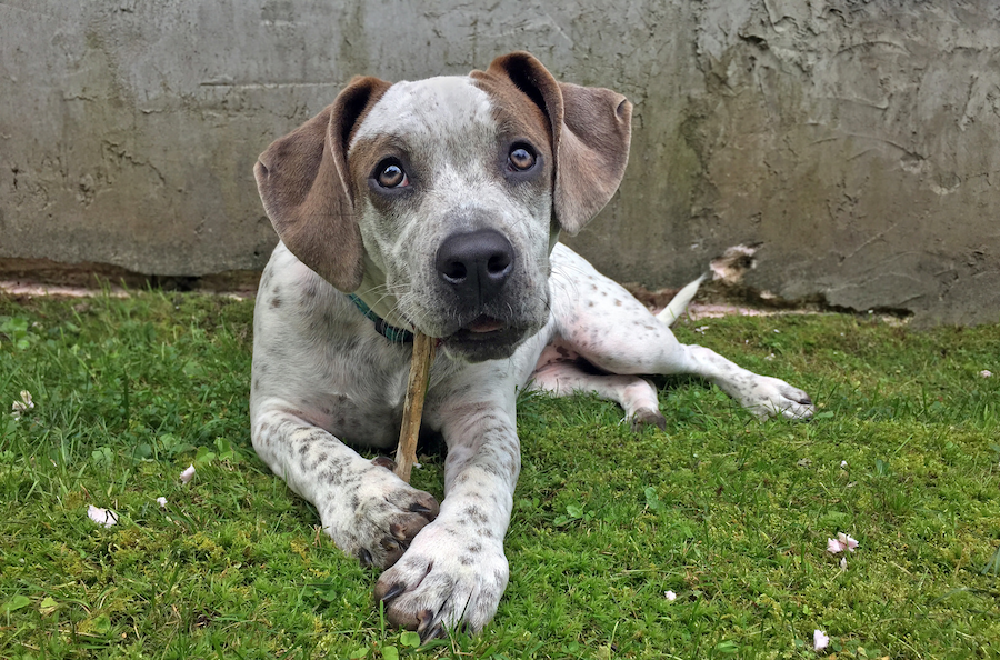 The Writer's Dog: Three Lessons from a Shelter Worker for a Perfect