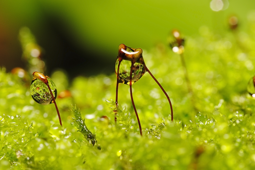 Beautiful Macro Photography - DezignHD - Best Source For ...