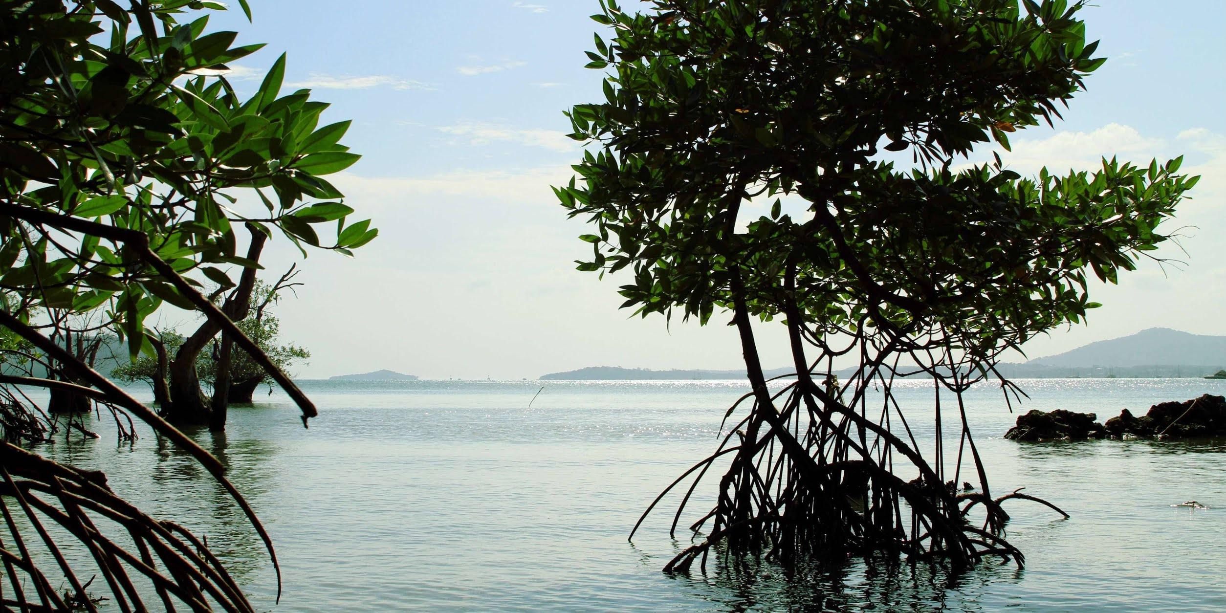 Krisis mangrove mengancam biodiversitas