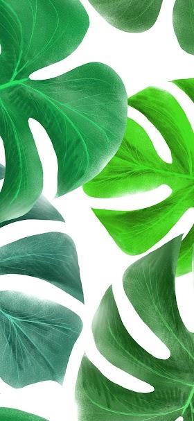 Giant green leaves wallpaper