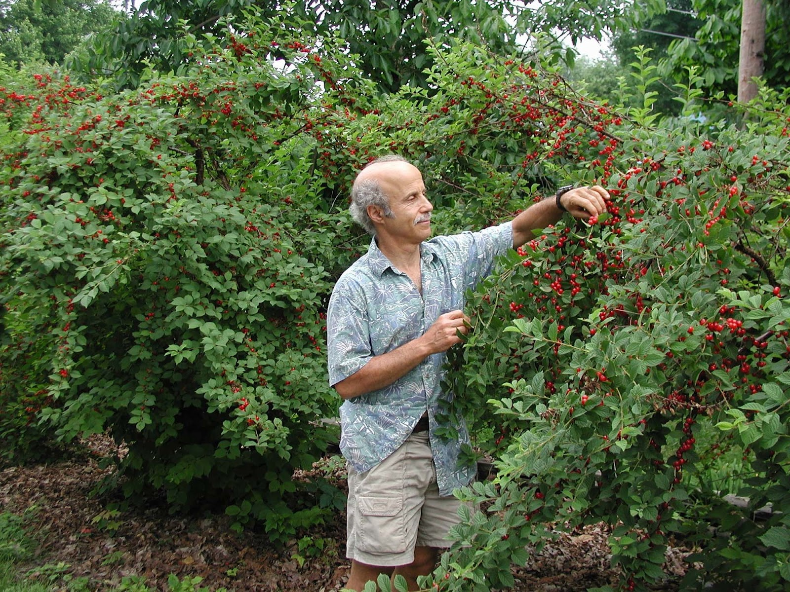 Temperate Climate Permaculture Permaculture Plants