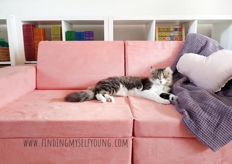 cat on whatsie play couch