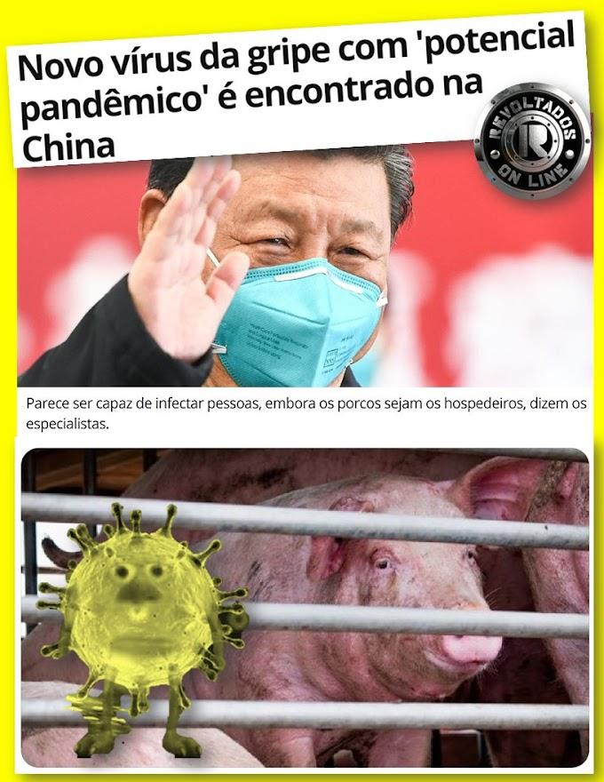 Alerta Mundial - Nova ameaça pandêmica, vírus usa porcos como hospedeiros,  novo ataque global chinês -