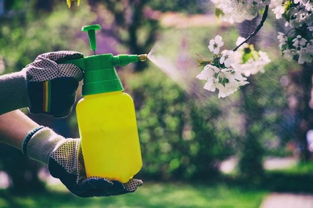 ΚΗΠΟΥΡΙΚΗ: Οικολογικό σκεύασμα για προστασία των φυτών σας από την Μελίγκρα
