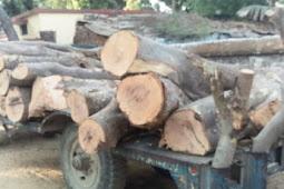 फूलबेहड़ में वन विभाग ने अर्जुन की बेशकीमती लकडी का पकडा ट्राला