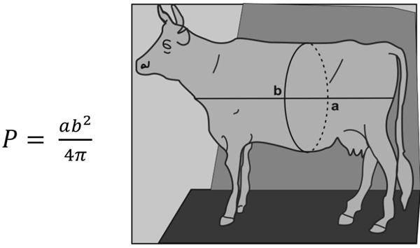"""Pela fórmula de Gerdes, para o """"peso"""" de um animal, multiplicamos a medida do tronco a pelo quadrado da medida da cintura b e dividimos pelo quádruplo do número π."""