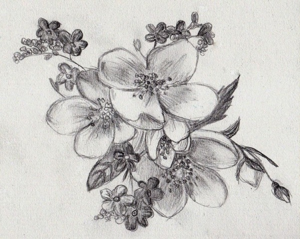 Pictures Of Flowers Sketches