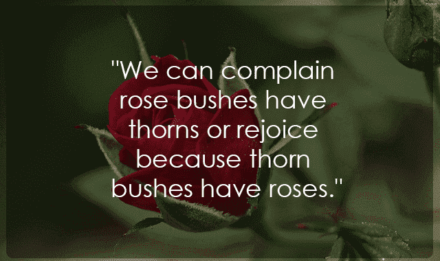 flower rose quotes