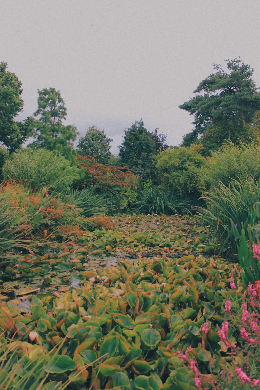 Exploring Goltho Gardens in Lincolnshire
