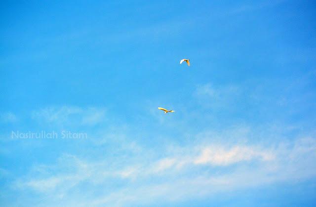 Burung berterbangan di area pulau panjang