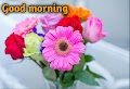 Good morning images With Rose Flowers Free Download Best Beautiful good morning images