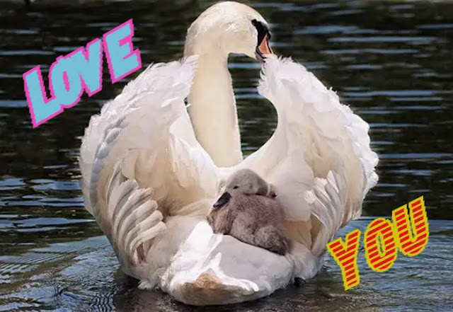 Beautiful Love Birds Images Free Download