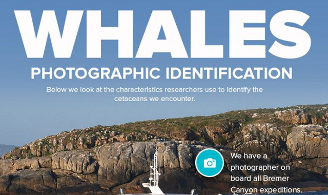 Photographic identification of whales