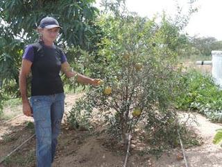 Técnica de reuso de água mantém ativa a produção agrícola durante seca em Cubati