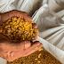 Produção de milho em Pernambuco deve alcançar 141 mil toneladas na safra 2020/21; Agreste e Sertão são destaques