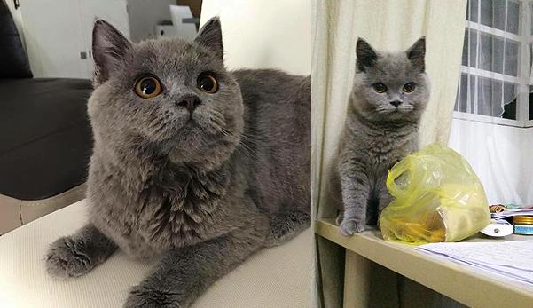 The power of doa, kucing RM3,000 yang hilang dapat dijumpai semula