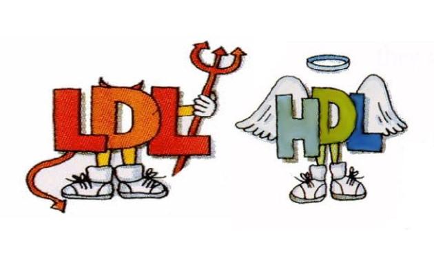 Colesterol bueno, colesterol malo: HDL y LDL