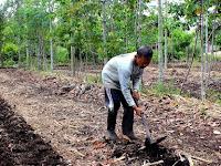 Pak Taman yang Sukses Kembangkan Lahan Gambut Tanpa Bakar