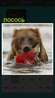 медведь в воде поймал рыбу лосось в игре 667 слов 5 уровень