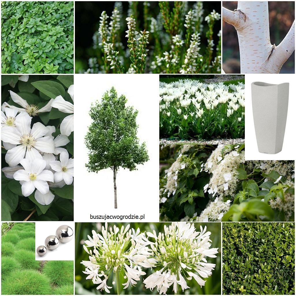 ogród, biało-zielona rabata, ogród minimalistyczny
