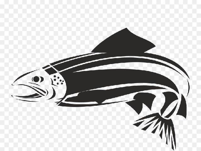 Gambar Ikan Tongkol Hitam Putih Gambar Ikan Hd