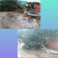 Chuva e ventaria derrubam árvores em Jaçanã