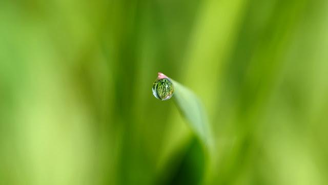 petite perle timide