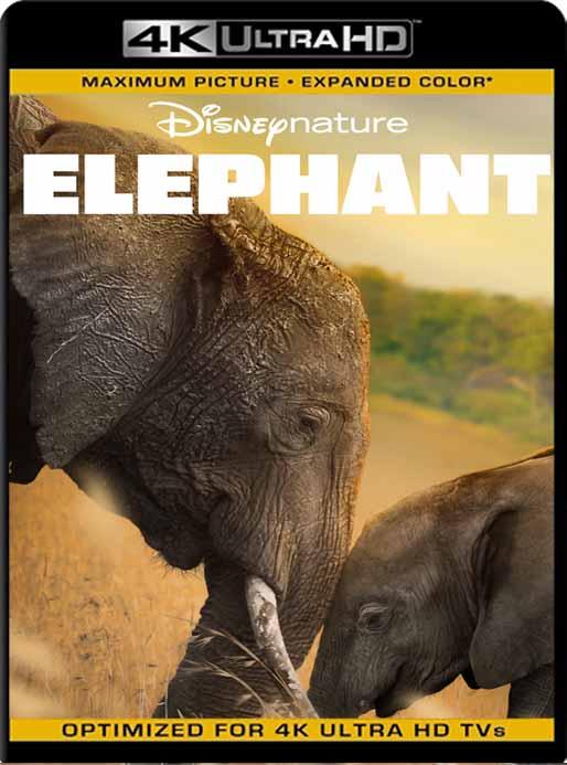 Elephant (2020) 4K 2160p UHD [HDR] Latino [GoogleDrive]