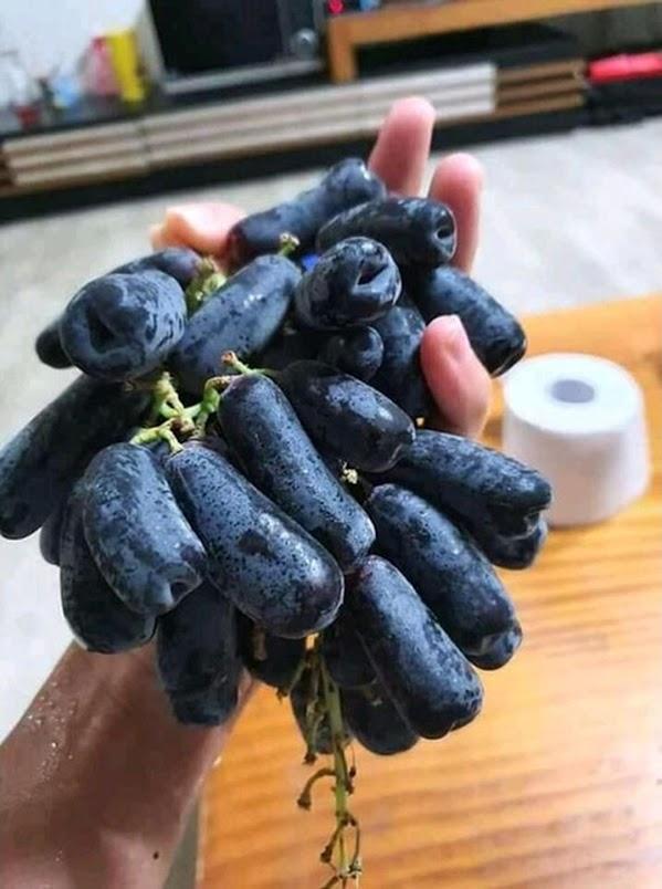 Bibit anggur import moondrop genjah bayar di tempat Jawa Tengah