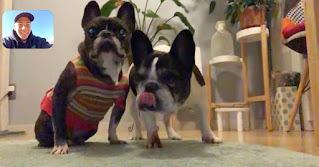 Taka menyapa kedua anjingnya di Jepang