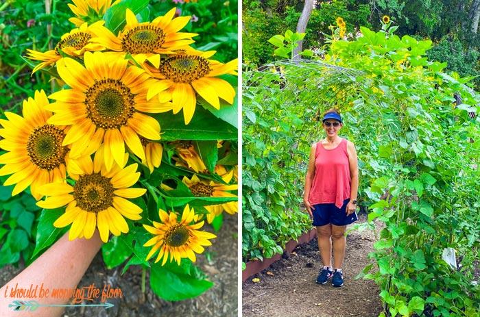 Summer Garden Photos