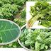 Jenis Hama dan Penyakit Yang Menyerang Tanaman Sayur Bayam Serta Cara Umum pengendaliannya