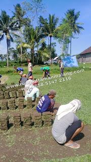 Suplay rumput gajah mini di trawas mojokerto tahun 2021