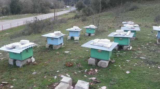 Δείτε πως ξεχειμώνιασαν φέτος τα μελίσσια τους οι μελισσοκόμοι που έχουν τα μελίσσια στο βουνό...