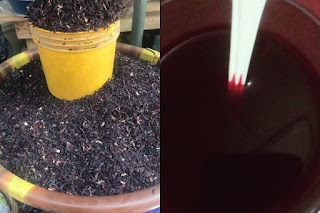 Zobo Drink Production