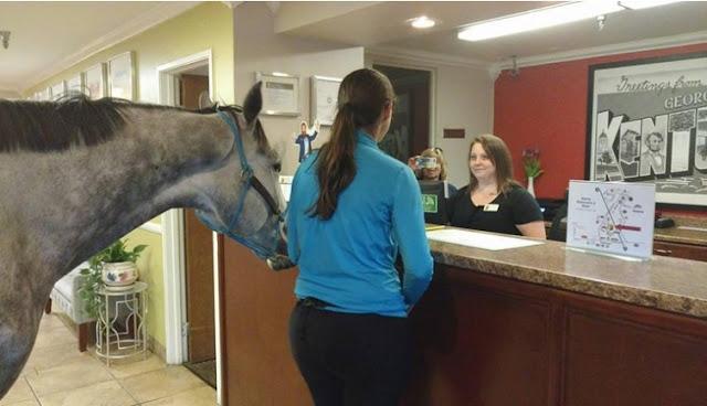 Hebohh !! Cewek Ini Bawa Kudanya ke Kamar Hotel