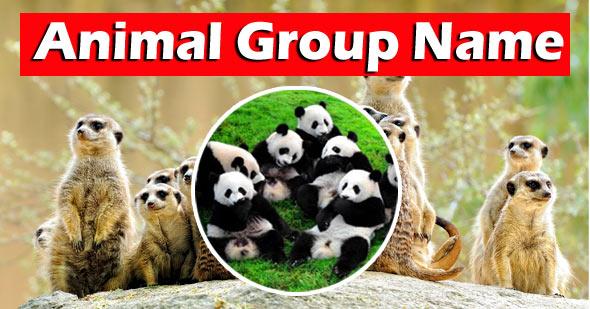 animal group  name