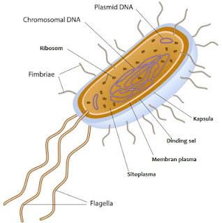 Gambar Archaebacteria