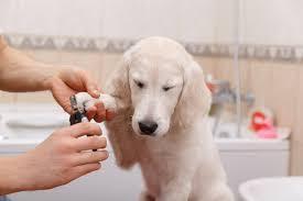 corte de unhas de cães