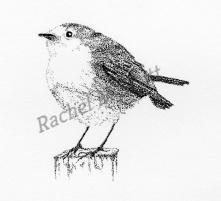 Robin stipple illustration by Rachel M Scott