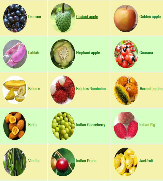 Juwita Blog: Fruits | Tropical fruit list