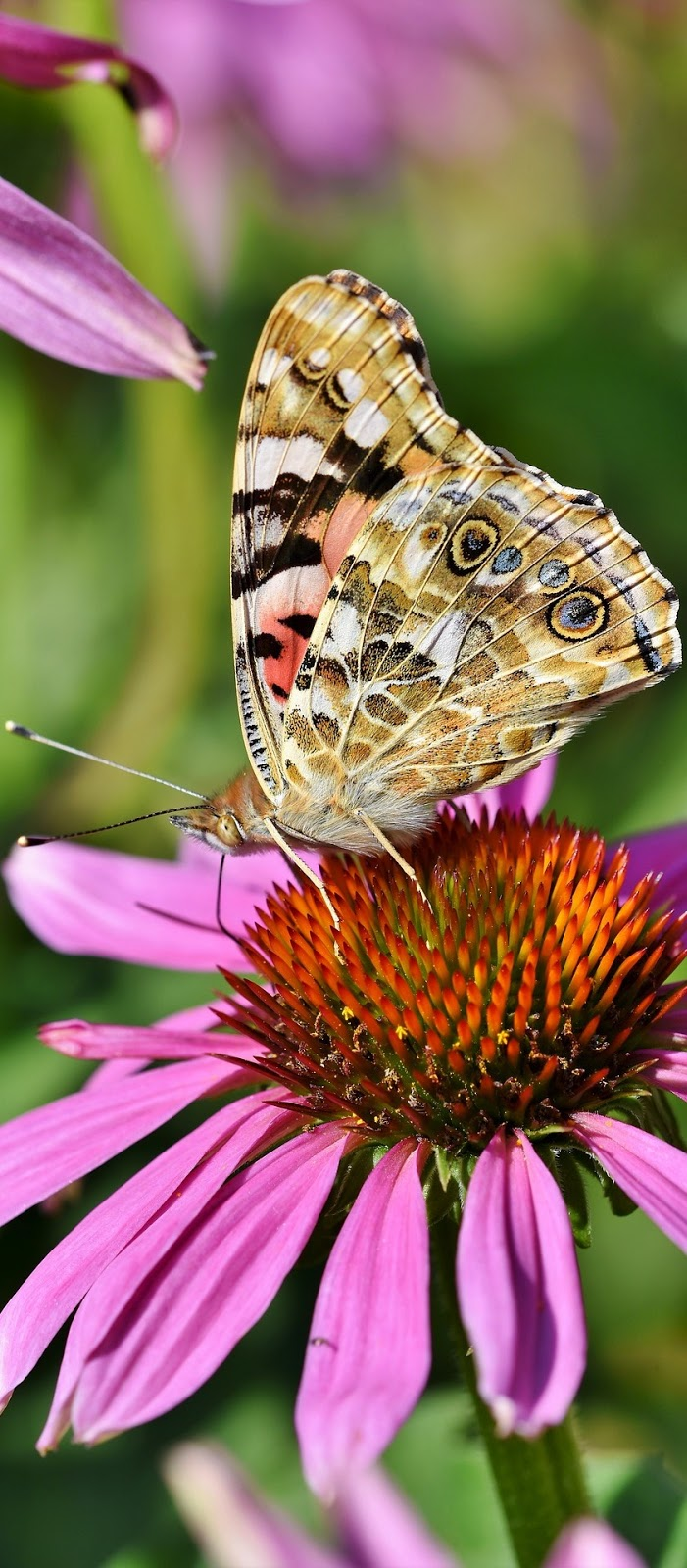 A pretty butterfly.