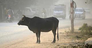 Μουσουλμάνος ξυλοκοπήθηκε μέχρι θανάτου επειδή σκότωσε μια αγελάδα στην Ινδία