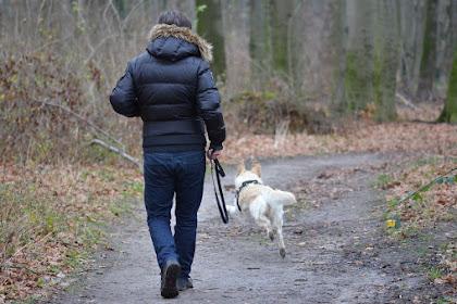 Antara Anjing Dan Gaya Hidup Kita