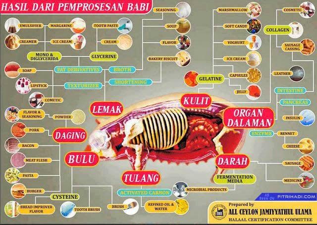 FAKTA: 16 Sebab Kenapa Babi Tak Boleh Dimakan
