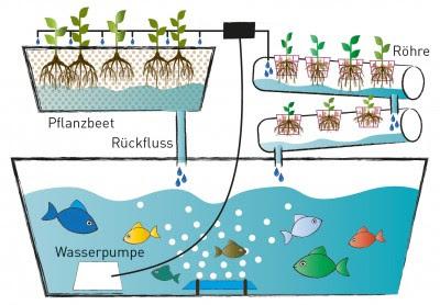 ✓ Perbedaan Antara Sitem HIdroponik Dan Aquaponik, mana yang lebih unggul ?