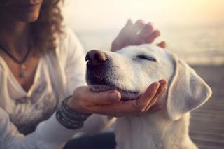 Causas de tos en perros | Cómo tratar la tos en perros, causas y opciones de tratamiento