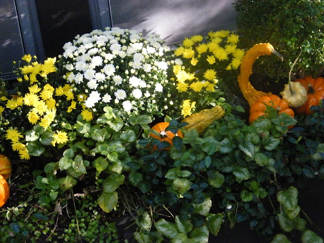 Bright mums whose colors can be seen from a distance, along with shiny gourds, catch the light and add to the magic.