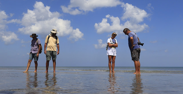 New Zealand Tourists Play Sea Turtles on Selayar Beach